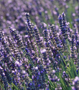 Sue Dodd Fleming